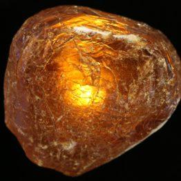 Copal Amber
